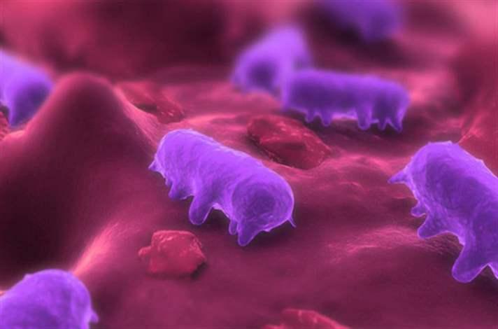 Salmonella Nedir?