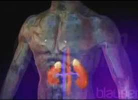 Adrenal Kortikosteroidler