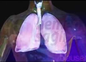 Akciğer Zarı İltihabı (Plörezi)