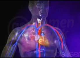 Akciğerler Nasıl Çalışır