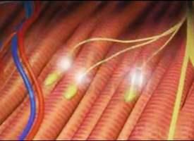 Elektrodiagnostik Testler