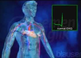 Kalp İletim Sistemi
