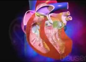 Kalp Nasıl Çalışır