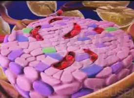 Şeker Hastalığı (Diyabet) İlaçları